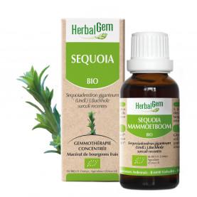 SÉQUOIA - 15 ml | Herbalgem