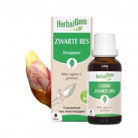 ZWARTE BES - 50 ml   Herbalgem